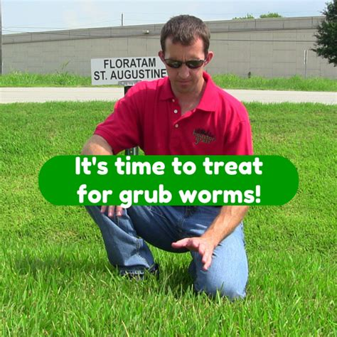 Prevent Damage from Grub Worms in Houston Lawns
